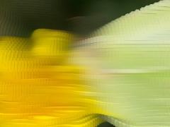 Butterfly-on-dandelion